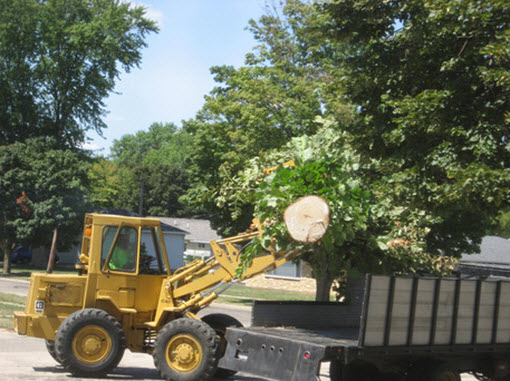 Why should you hire professional tree removal services?