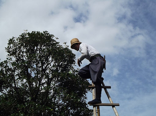 tree pruning service Charlotte NC
