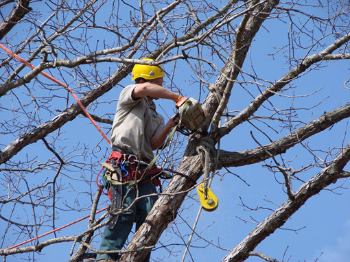 tree removal service charlotte nc