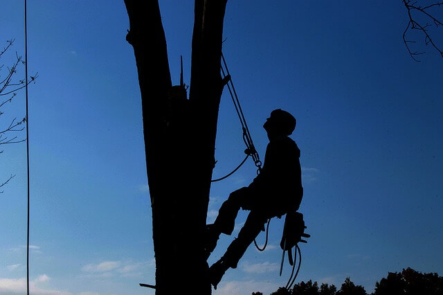 emergency tree service charlotte nc