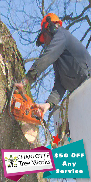 TREE REMOVAL COUPON CHARLOTTE