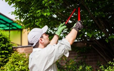 Things to Know About Trimming Your Trees